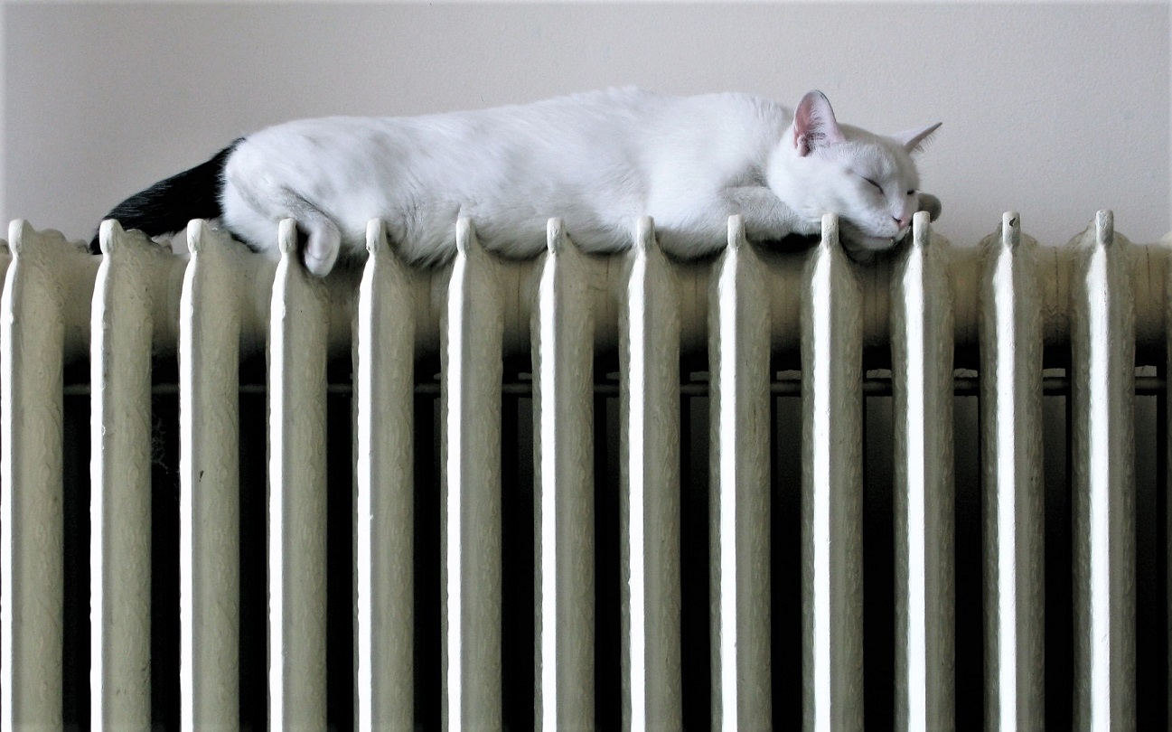 cat on a radiator heating home