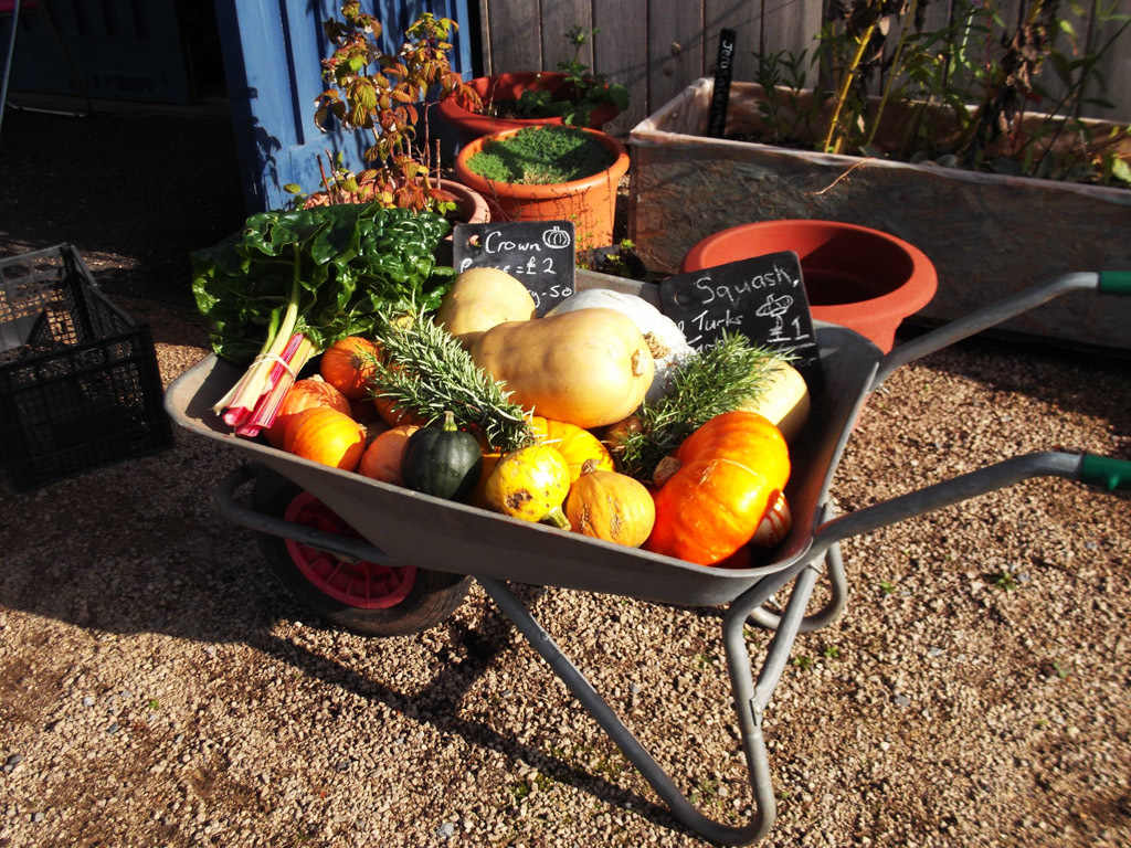 Own grown vegetables in a barrow