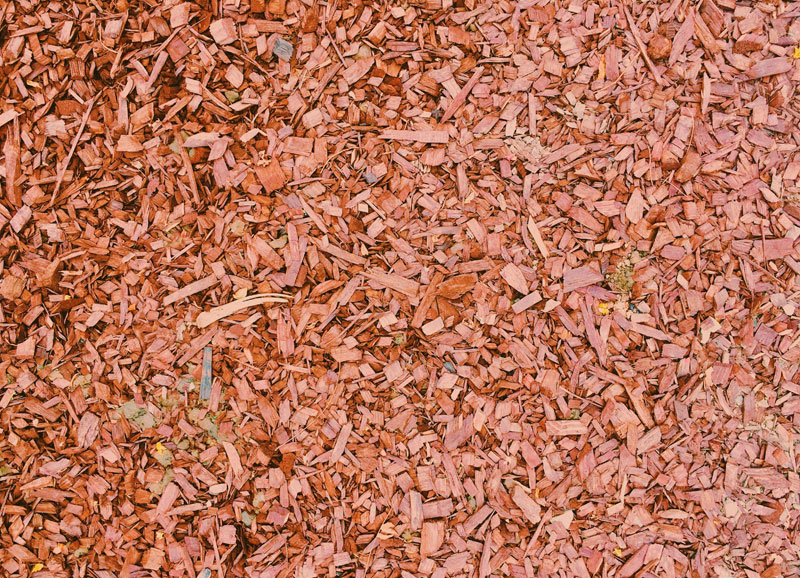 wood chips for biomass